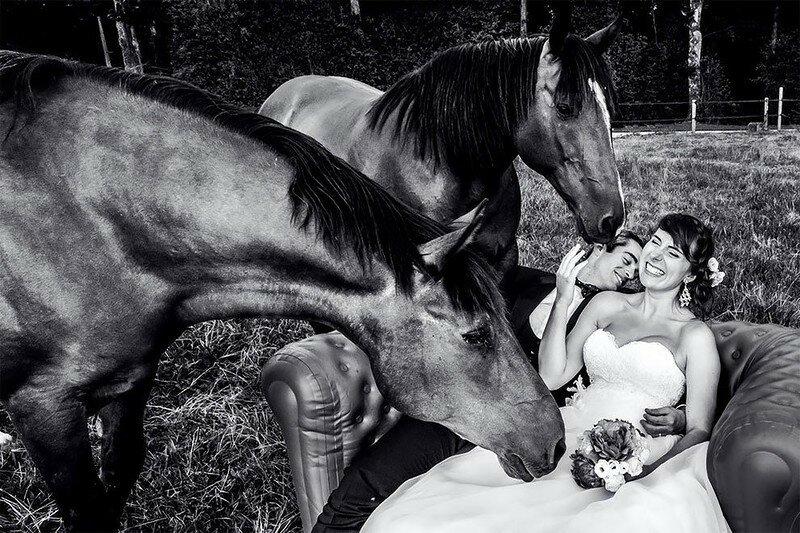 0 17af1e d28615dc XL - Курьезные свадебные фотографии с участием животных