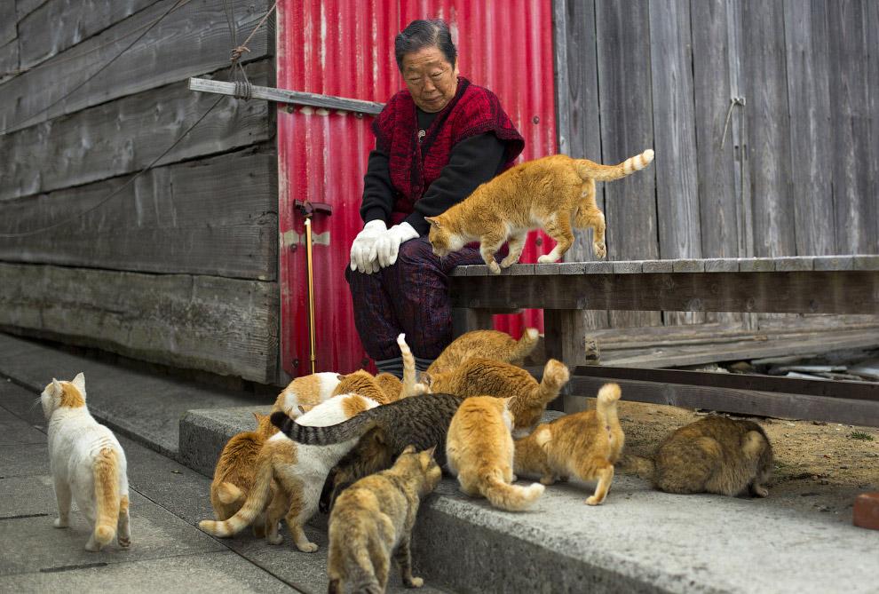 19. Коты просят у туристов что-нибудь вкусненькое. Кто-то просто смотрит и ждет, кто-то трога