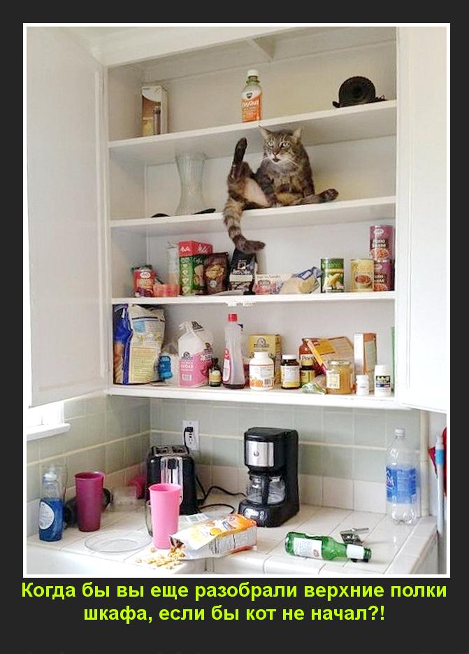 Когда бы вы еще разобрали верхние полки шкафа, если бы кот не начал?!