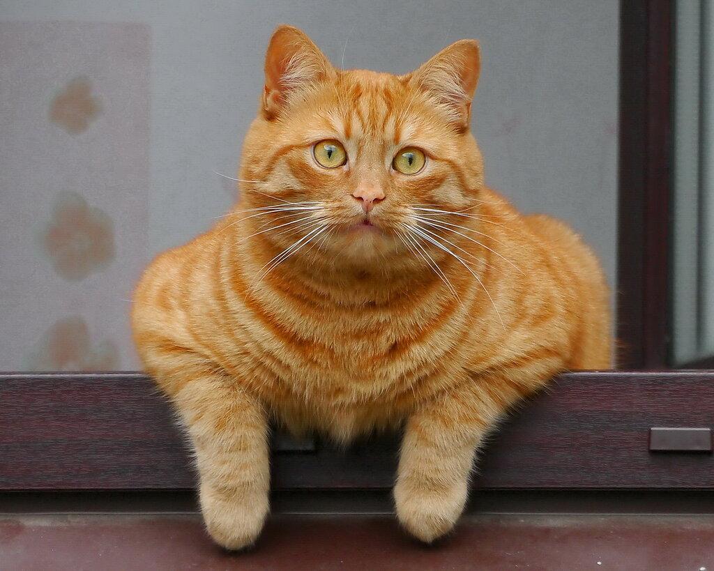 Соседский кот с первого этажа