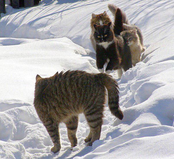 С днем кошек! На тропинке открытки фото рисунки картинки поздравления