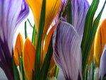 flowers-2-1194863.jpg
