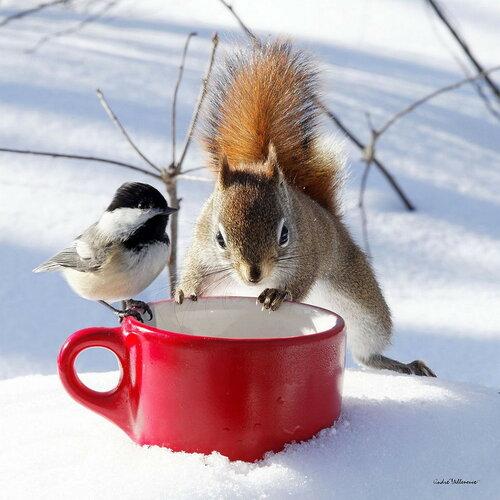 0 17cd3c d3608086 L - Вся красота в зимних картинках от 26.12.2017