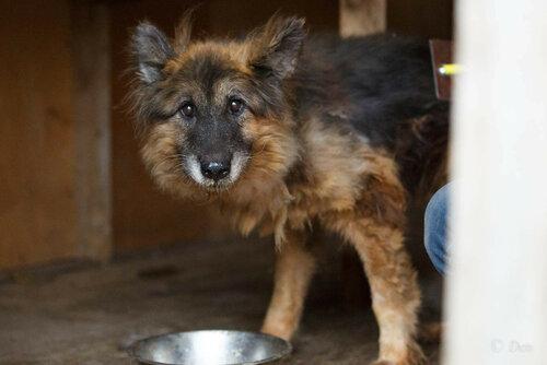 Гретта собака из приюта в москве догпорт фото