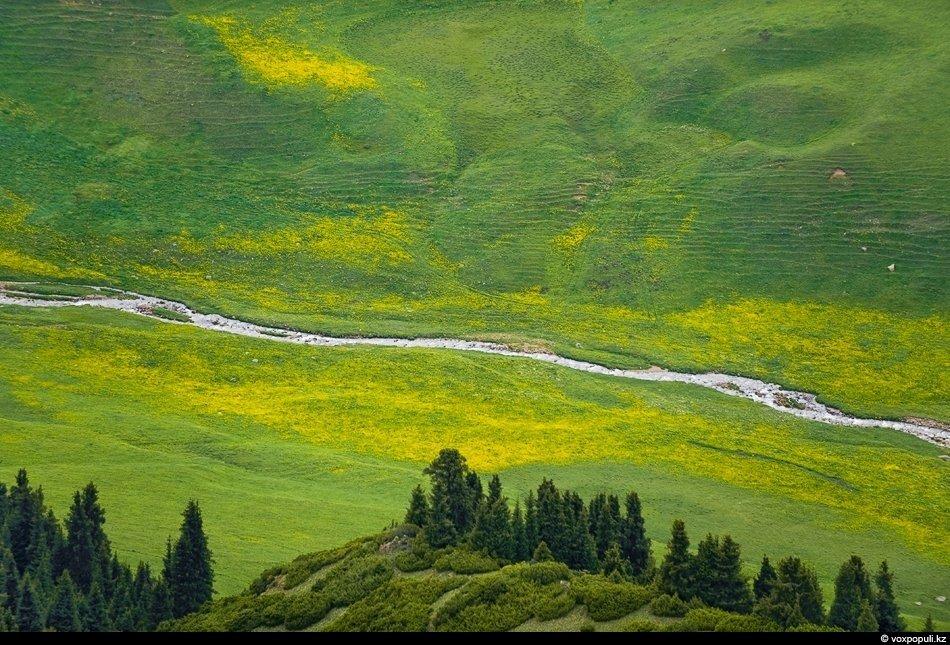 А это знаменитые тургенские моховые ельники:
