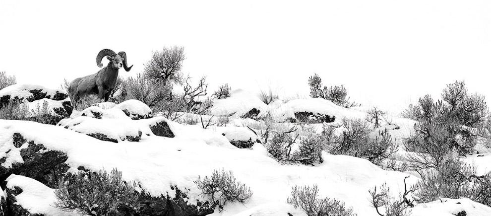 """10. Фарерские острова. Смотрите также """" Путешествие на Фарерские острова """". (Фото Wojciech Kruczynsk"""