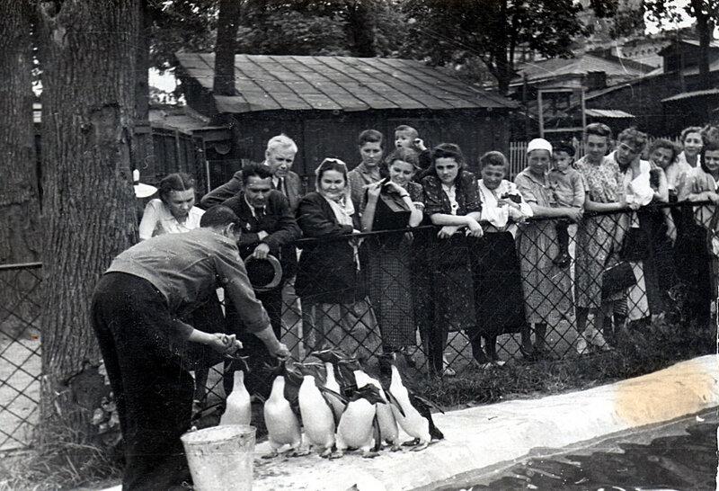 23107 Пингвины в Уголке Дурова.jpg