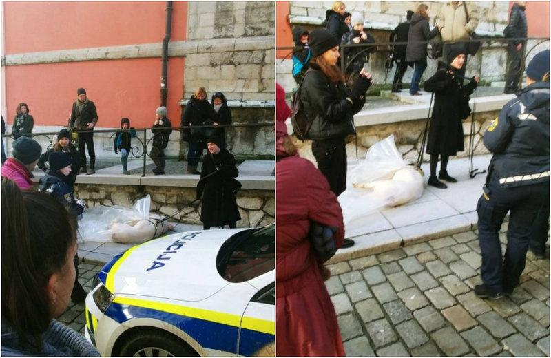 Веганка протащила по улице тушу свиньи в знак протеста