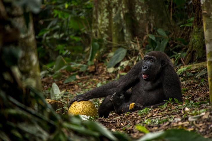 2. Хищный ктырь поймал маленькую муху и медленно высасывает ее содержимое. (Фото Kutub Uddin   Wildl