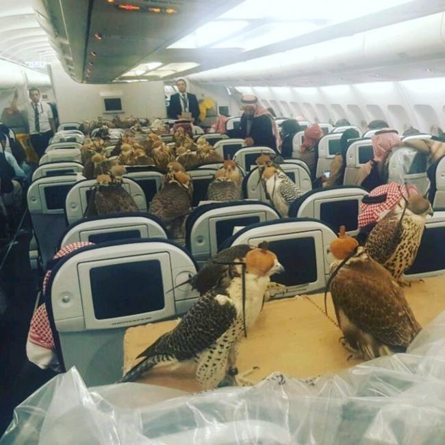 Доказательства того, что наборту самолета может случиться все что угодно (22 фото)