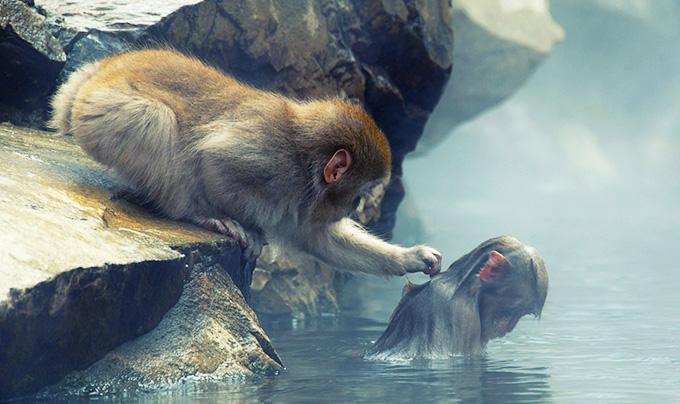 Один мудрый старик повёл мальчика в зоопарк. – Видишь этих мартышек? – Ага. – Видишь вон ту, которая