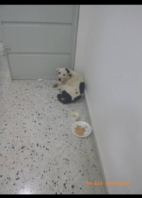 Хозяин оставил собаку в аэропорту, и она умерла из-за «разбитого сердца» (3 фото)