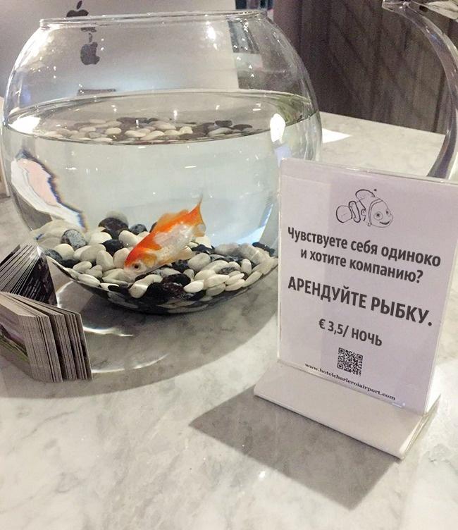 отели отель гостиница значение рыбка рыбки гостиницы уровень