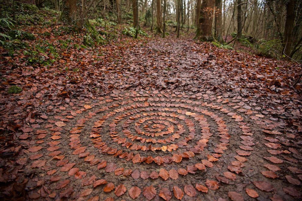 Геометрия природы