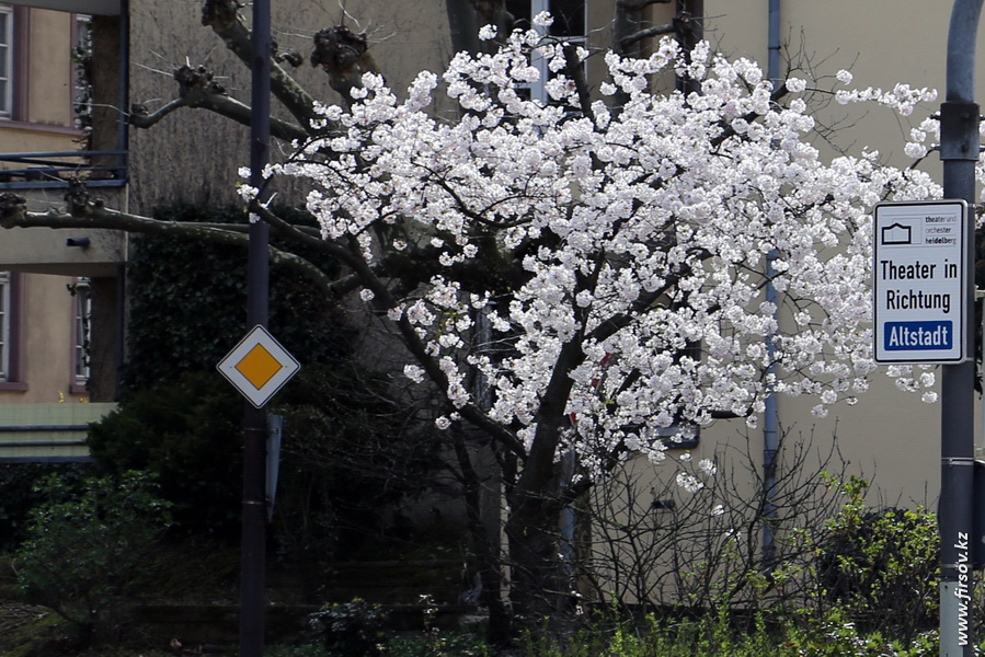 Heidelberg_20137_zpsd74cda59.JPG