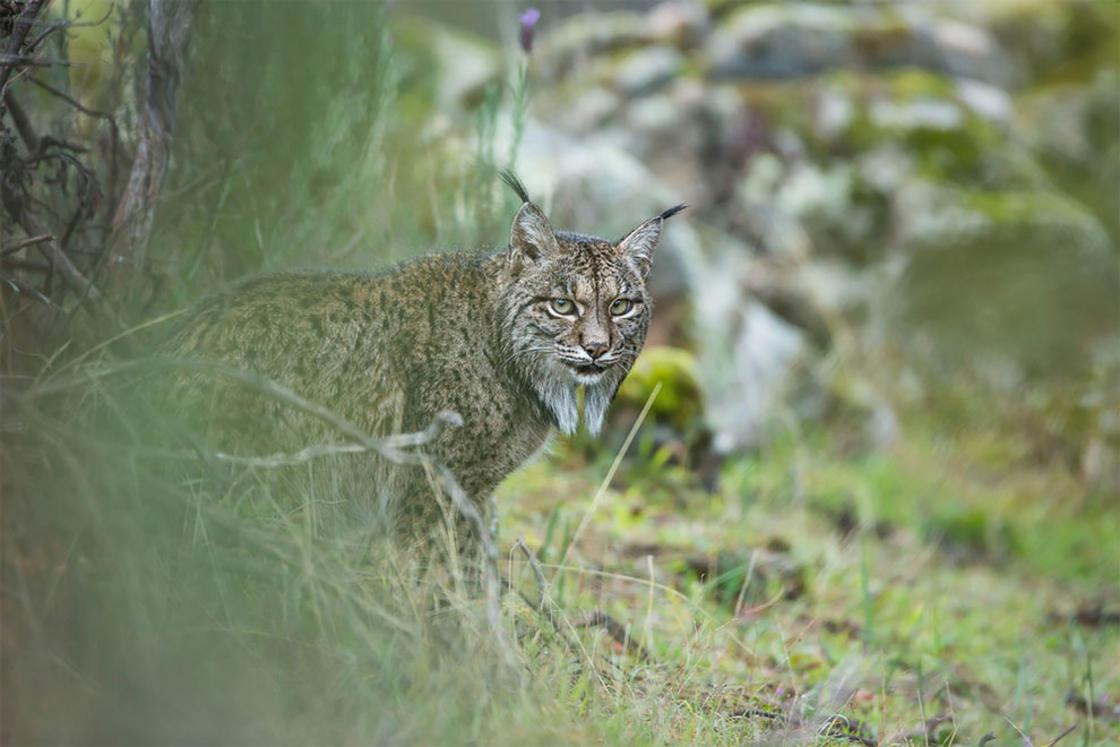 © Laura Albiac Vilas / Wildlife Photographer of the Year