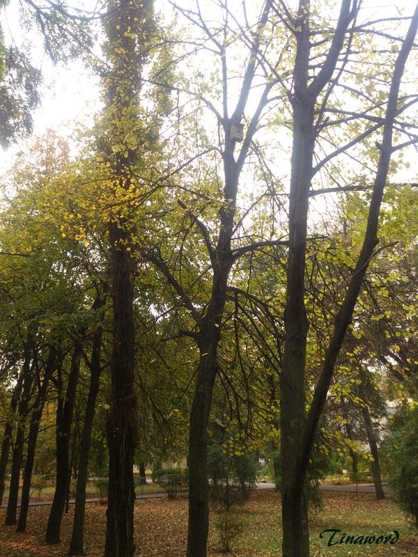 осень-9.jpg