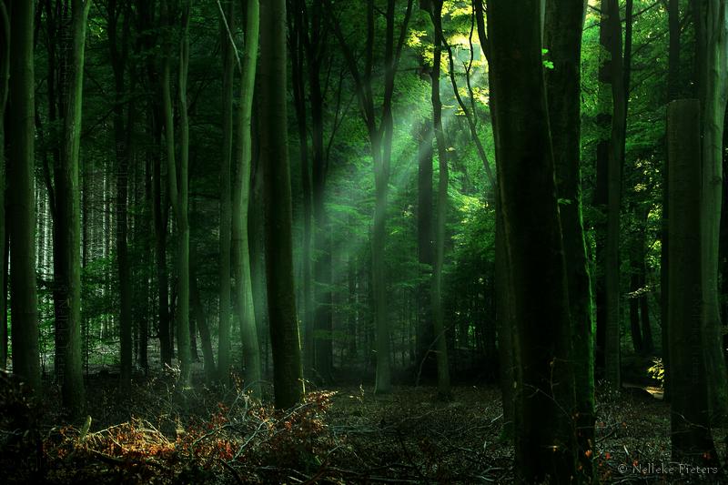 Breath-taking Landscapes Shot by Nelleke