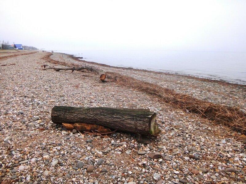 У моря, в январе ... DSC03702.JPG