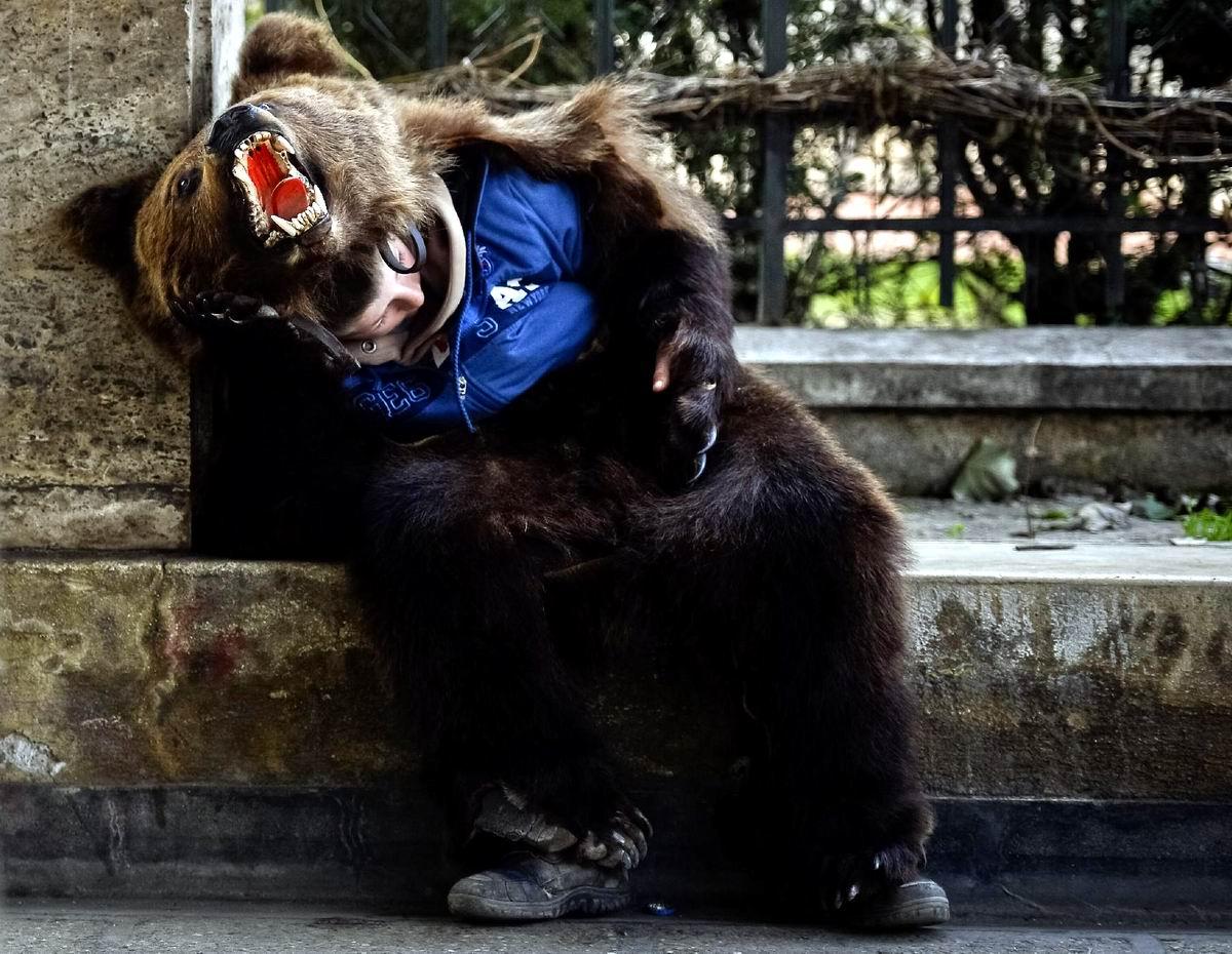 Праздники закончились, пора опять готовиться к продолжению спячки: Зимний досуг румынского медведя