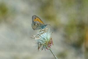 Бабочка. Просто бабочка...