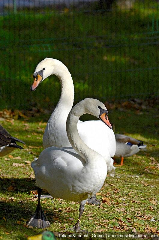 Птицы в Ораниенбауме