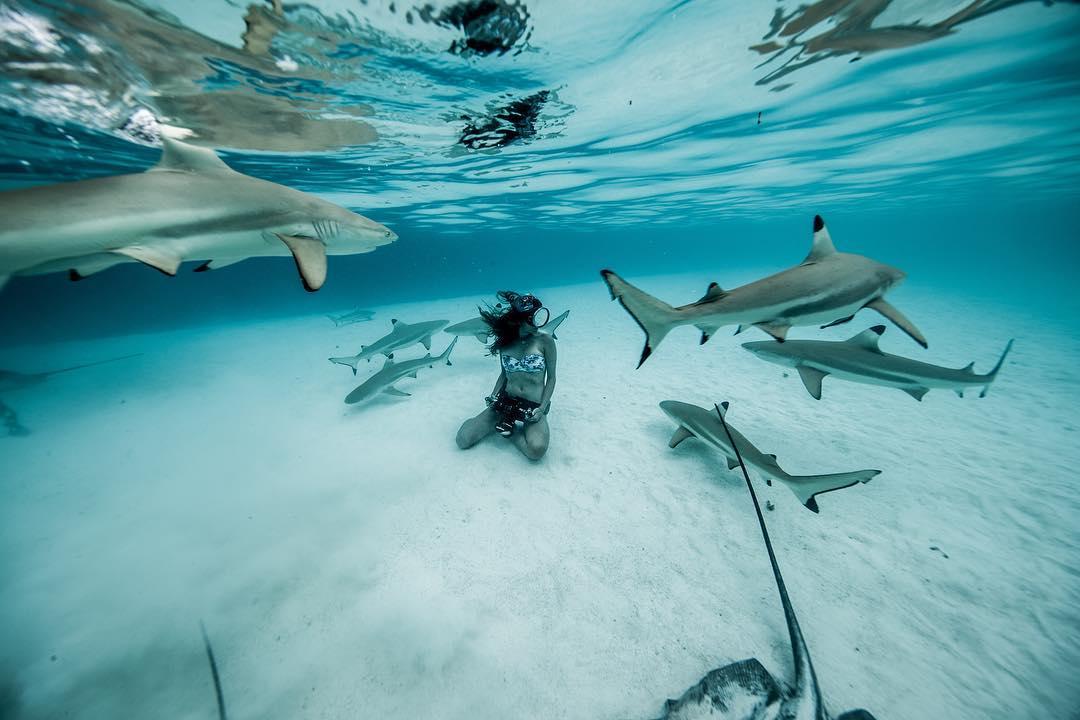 Просто вау: австралийка без опаски плавает с акулами