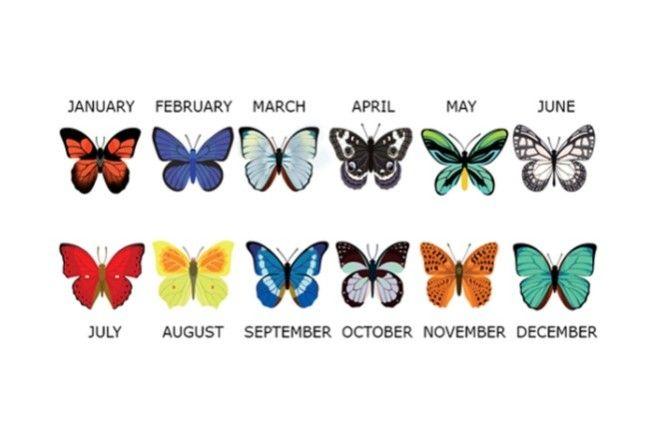 Выберите бабочку месяца своего рождения и узнайте о себе чуточку больше (6 фото)