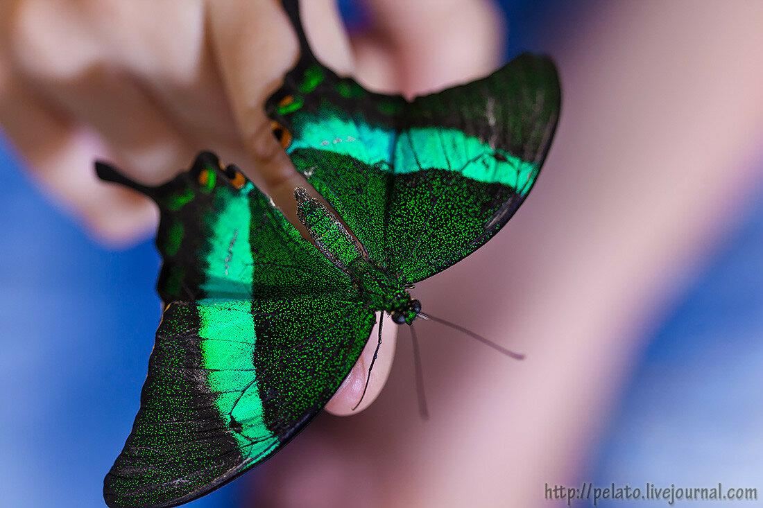 Dubai Butterfly Garden Парк Бабочек Дубаи ОАЭ UAE