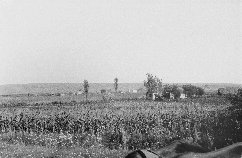 Поле кукурузы и подсолнечника