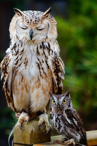 owls15.jpg