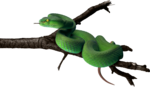 snake_PNG4083.png