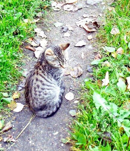 Котёнок на тропинке