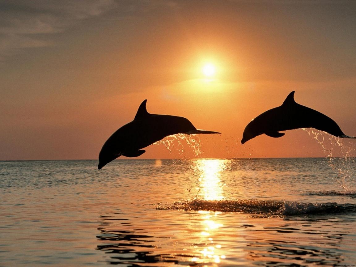 День Черного моря. Дельфины прыгают