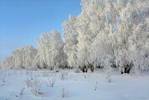 На краю морозного леса