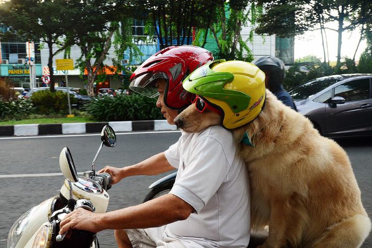 1. Собак зовут Туз и Армани. Впервые они проехались на заднем сиденье мотоцикла в возрасте не