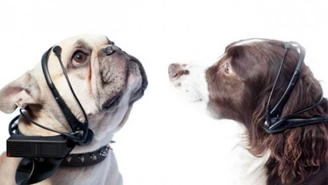 Устройство «No More Woof» позволяет переводить язык собачьего языка в понятные запросы для человека.