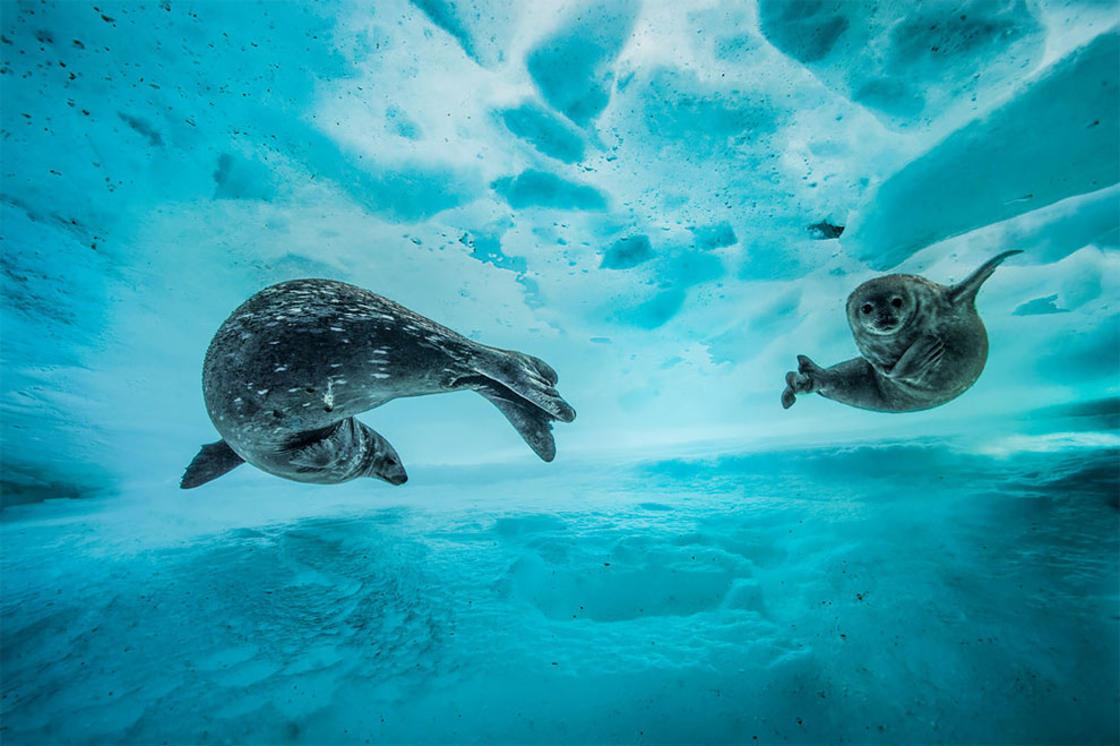 © Laurent Ballesta / Wildlife Photographer of the Year