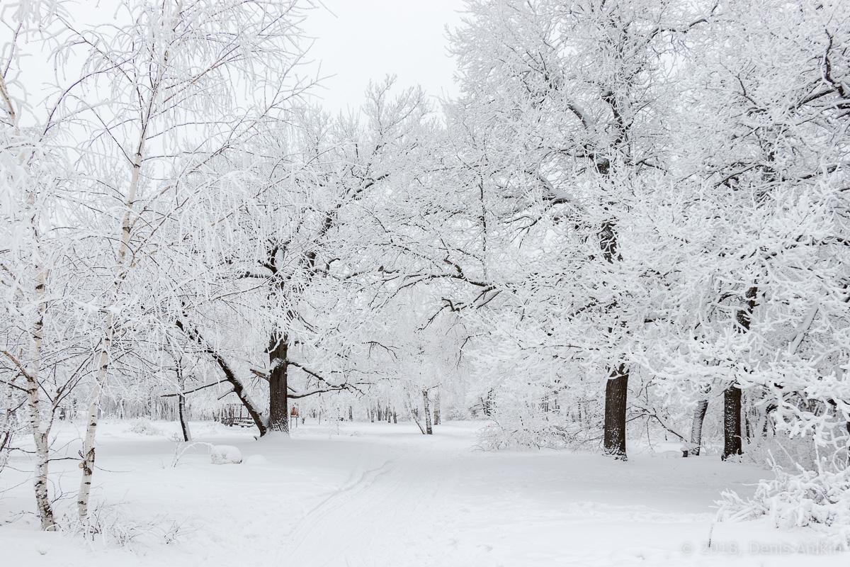 зима лес кумысная поляна фото 7