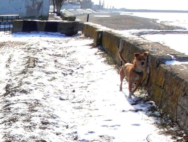 Собака в январе, год 2018 (23).JPG