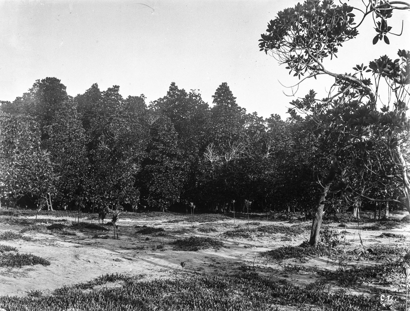 174.Вид мангрового леса