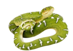 snake_PNG4047.png