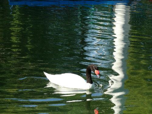 В парке на пруду...