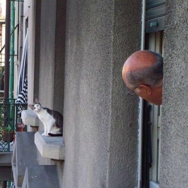 кошки-кошки-3.jpg