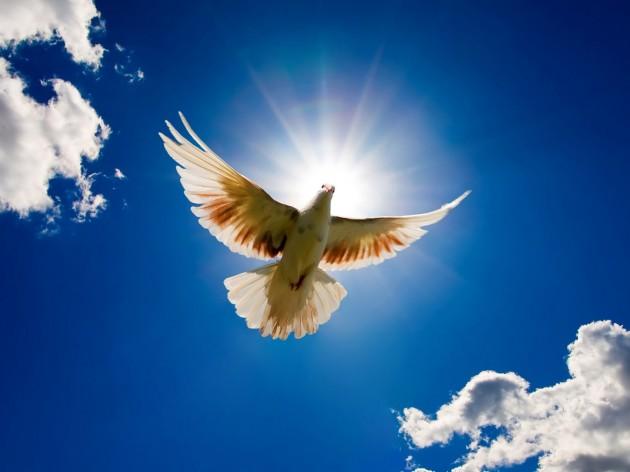 21 сентября — Международный день мира. Голубь на фоне солнца открытки фото рисунки картинки поздравления