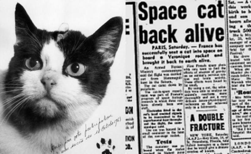 фото первая кошка в космосе