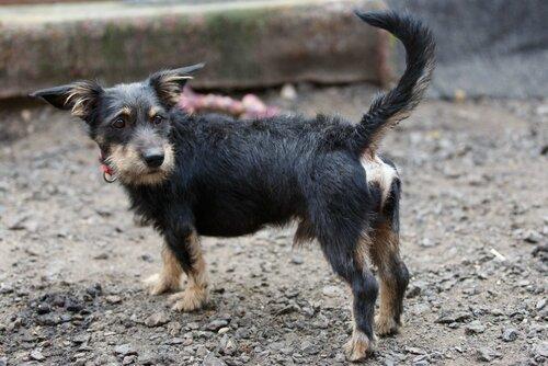 Сержик собака из приюта догпорт