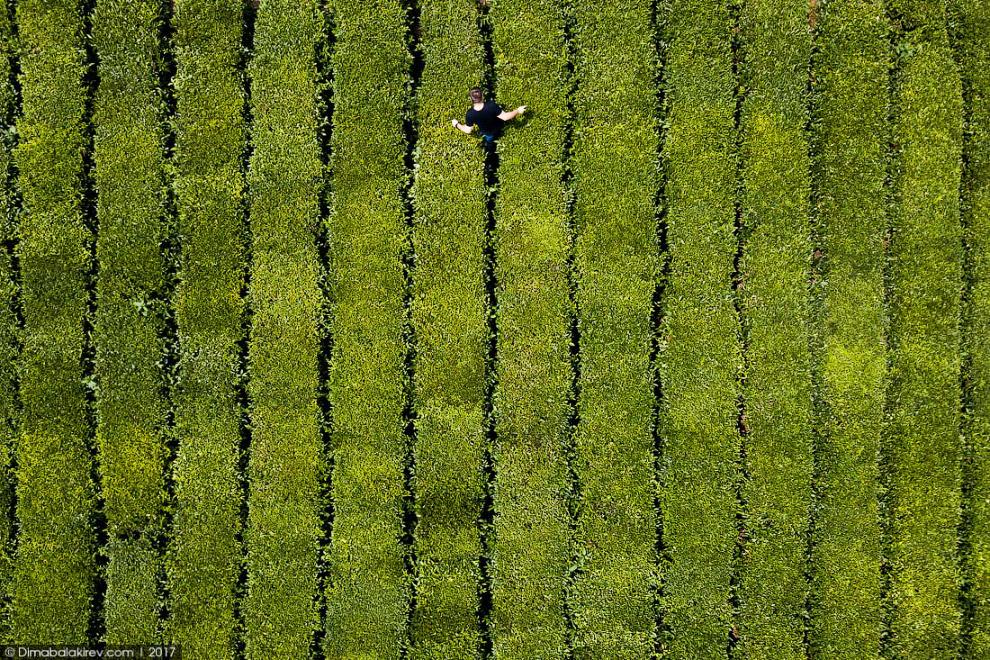 9. А мы бродили по Мацестинским чайным плантациям в Сочи.