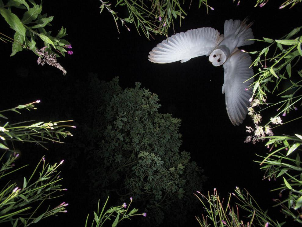 18. Победитель всего «птичьего» конкурса Bird Photographer of the Year 2017. Фламинго и их пт