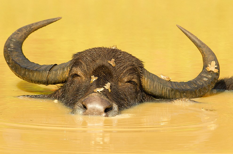 45. Пирс на озере в Новой Зеландии. (Фото © Mohd Nadly Aizat Mohd Nudri/National Geographic P